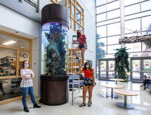 New Fish Tank Offers a Flood of Possibilities