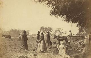Edisto Plantation