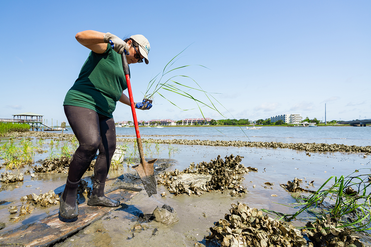 Spartina Grass Planting - Student Volunteers
