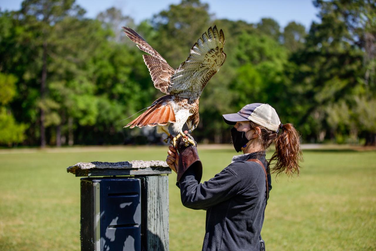 Bird's Of Prey Center
