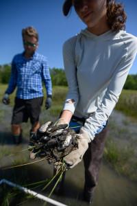 saving biodiversity course